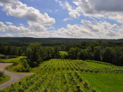 The scenic vineyard at Six Mile Creek, Ithaca's very own winery. 14850 file photo.