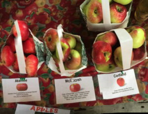 There will be several varieties of apples at a free tasting courtesy of Littletree Orchards. Photo provided.