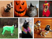 A pet photoshoot is scheduled this Saturday at the SPCA. Photo provided.